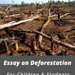 Essay on Deforestation For Students