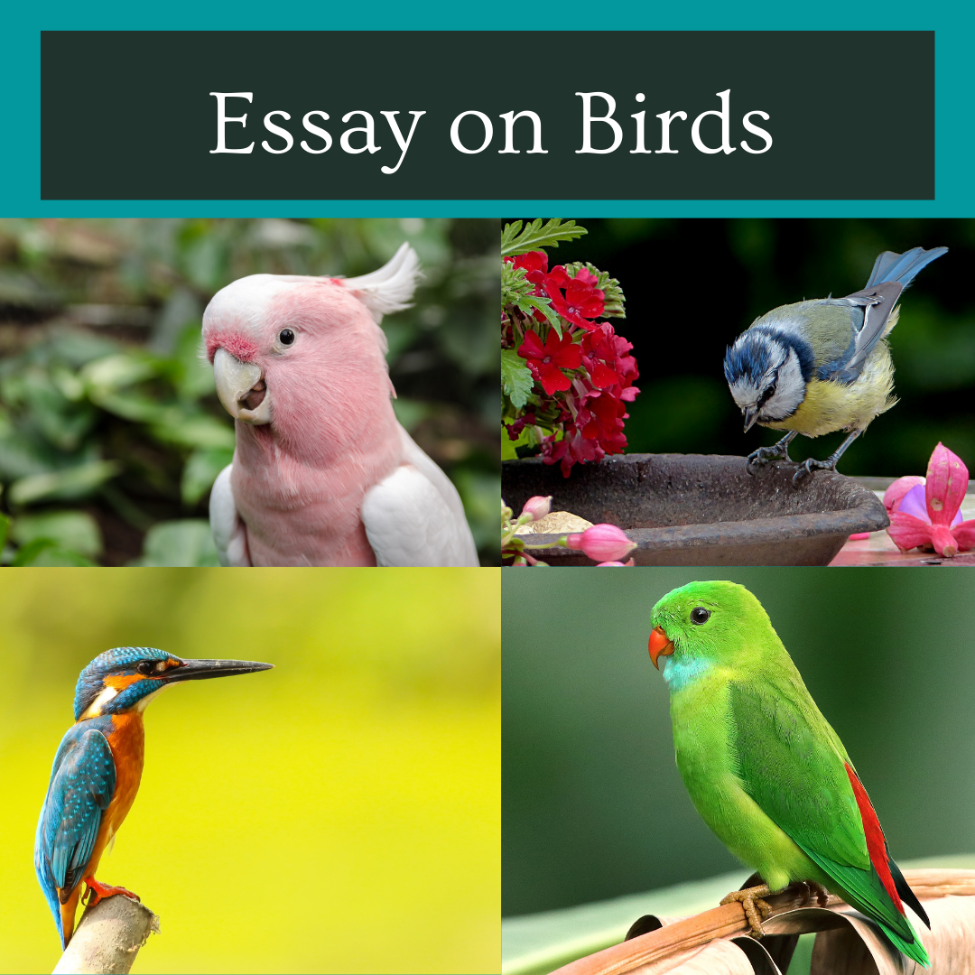 Essay on Birds For Students