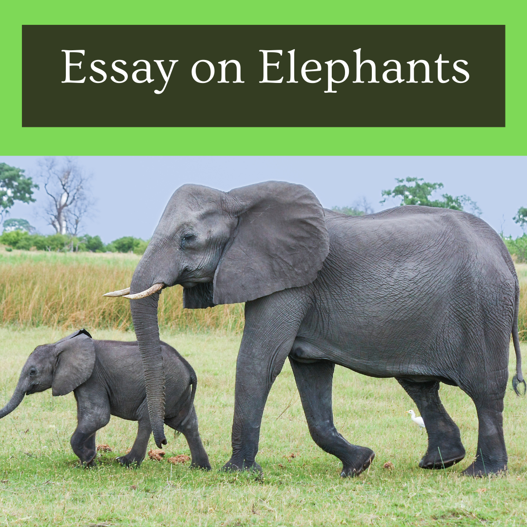 Essay on Elephants for students