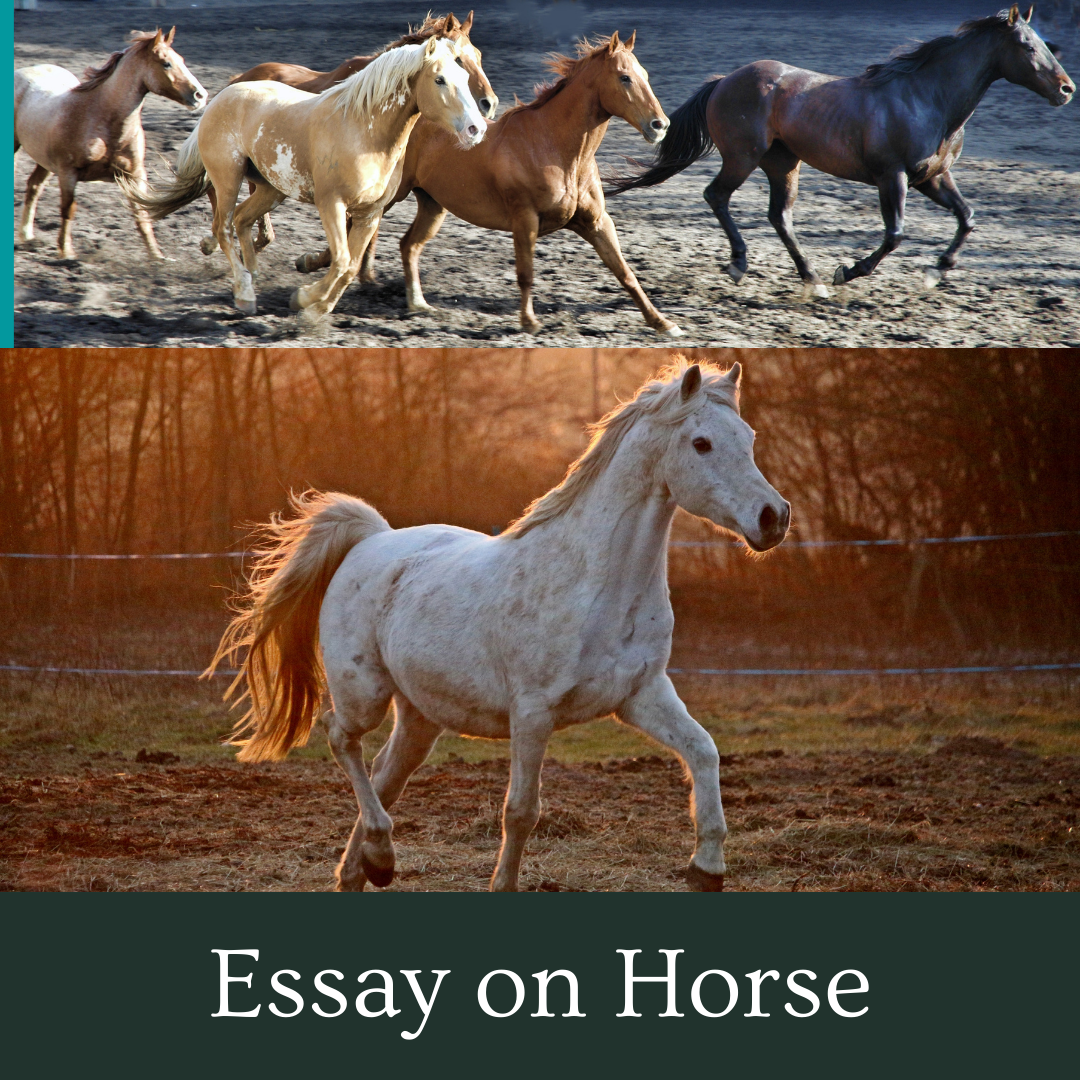 Essay on Horse For Students