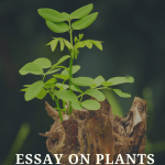 Essay on Plants | Benefits, Uses & Importance of Plants