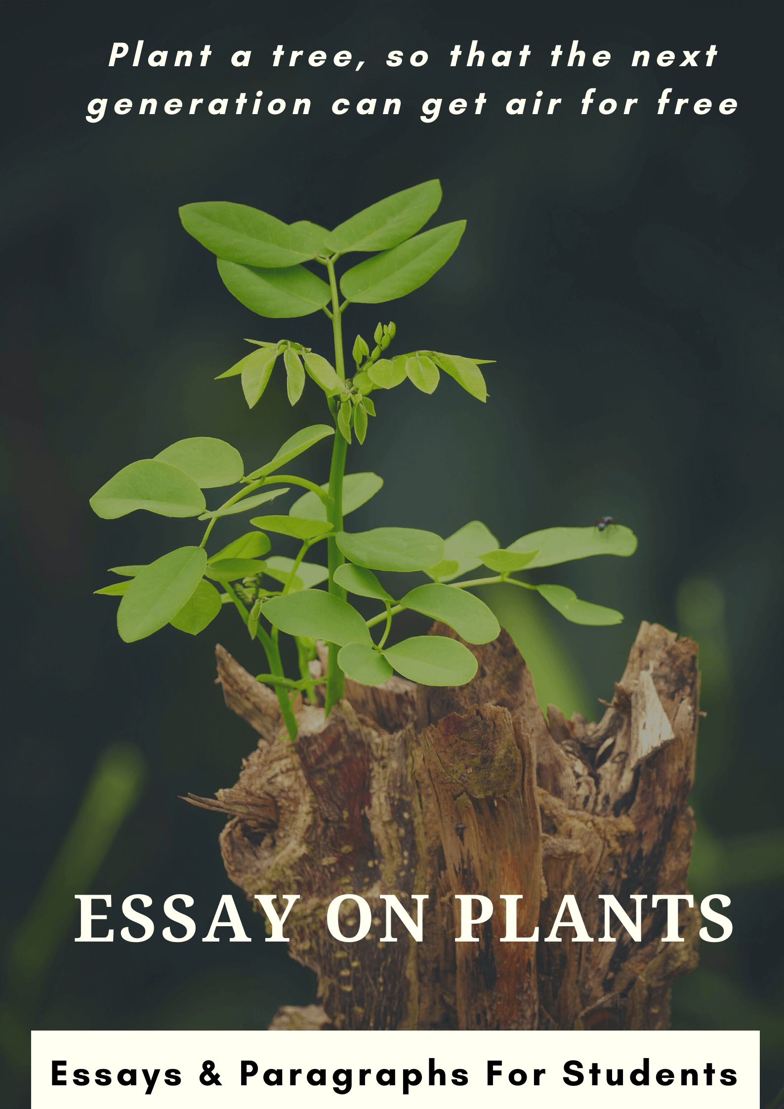 Essay on Plants For Students